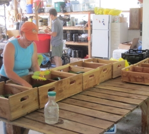 Packing summer CSA boxes