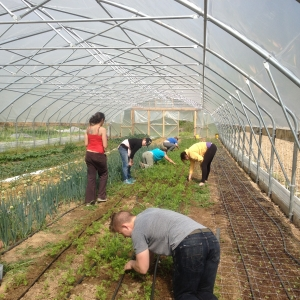 CSA member Farm Work Shift