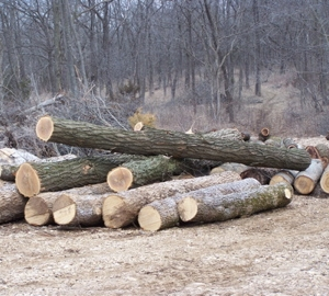 That\'s one big pile of logs!
