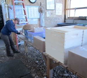 Building bee boxes