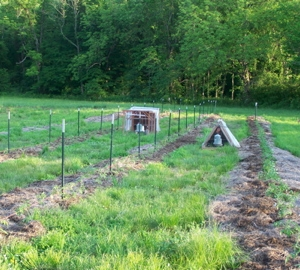 Rows of tomatoes and two portable chicken coops