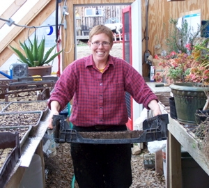 Bringing soil blocks into the greenhouse, ready to be seeded