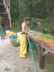 Washing the first carrots of the season