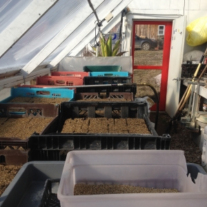Greenhouse transplant production