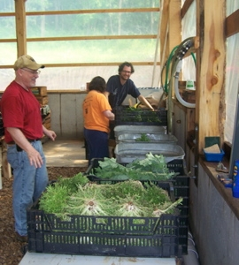 Jim & Susan & Daniel washing the just harvested greens