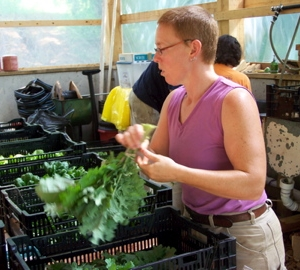 Liz bunching Red Russian Kale for the boxes