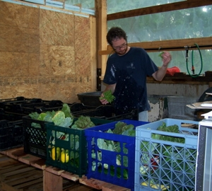 One of our members sorting thru the veggies