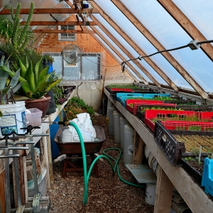 Inside the greenhouse early March