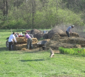 Loading mulch on the tractor