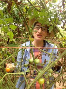 Sarah picking tomatoes