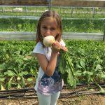 How to eat a Hakurei Turnip!
